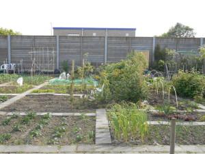 Mijn tuin recht van voren, de tuin loopt vanaf mijn tuinkast (middenrechts) tot ongeveer de 2e ijzeren paal van de muur (midden links)