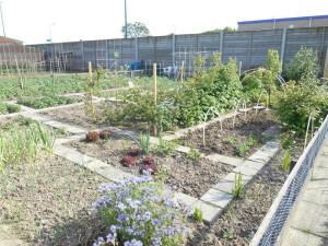 De tuin vanaf rechtsvoor genomen, de tuinkast is (rechtsboven) nog nét te zien.