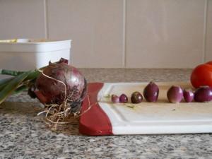 rode ui en egyptische ui