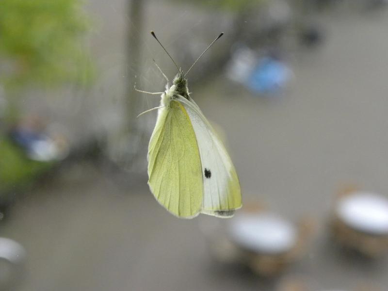 vlinder_gevlogen