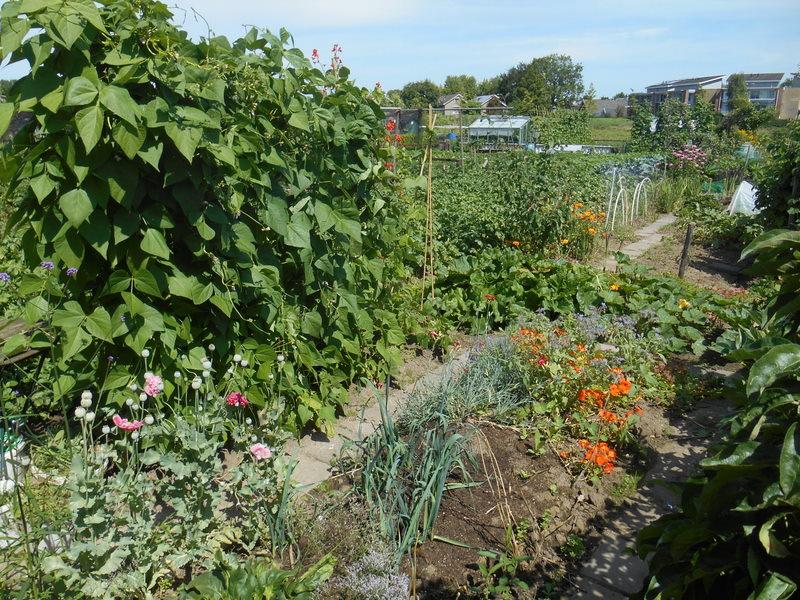 Overzicht tuin archives spruitenieren - Idee van allee tuin ...